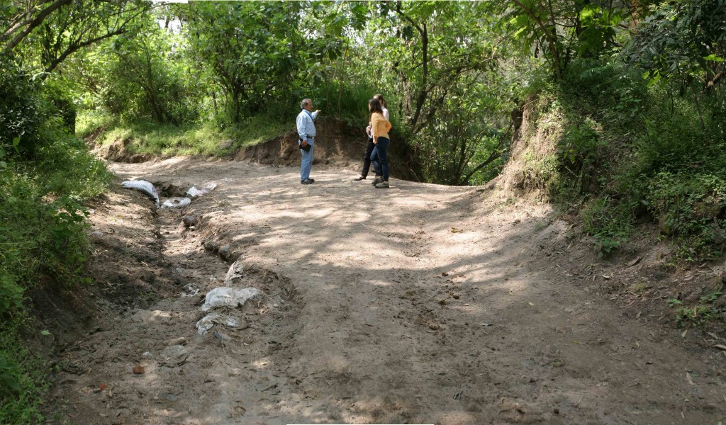 Field work with local forester in a highly impacted site within Los Colomos